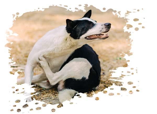 Hautprobleme Hund Futter